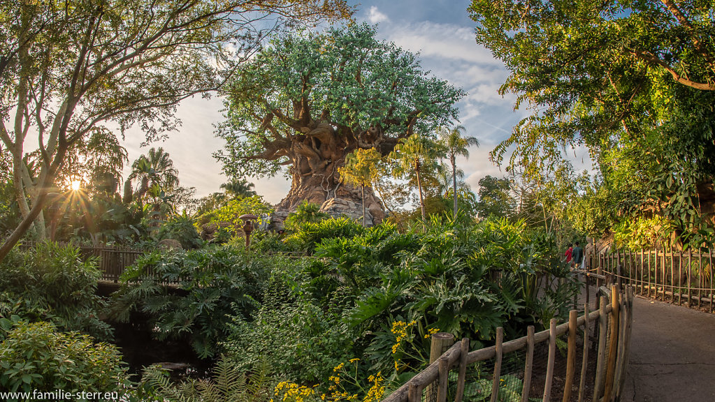 Animal-Kingdom-2018-12-25-608-HDR.jpg