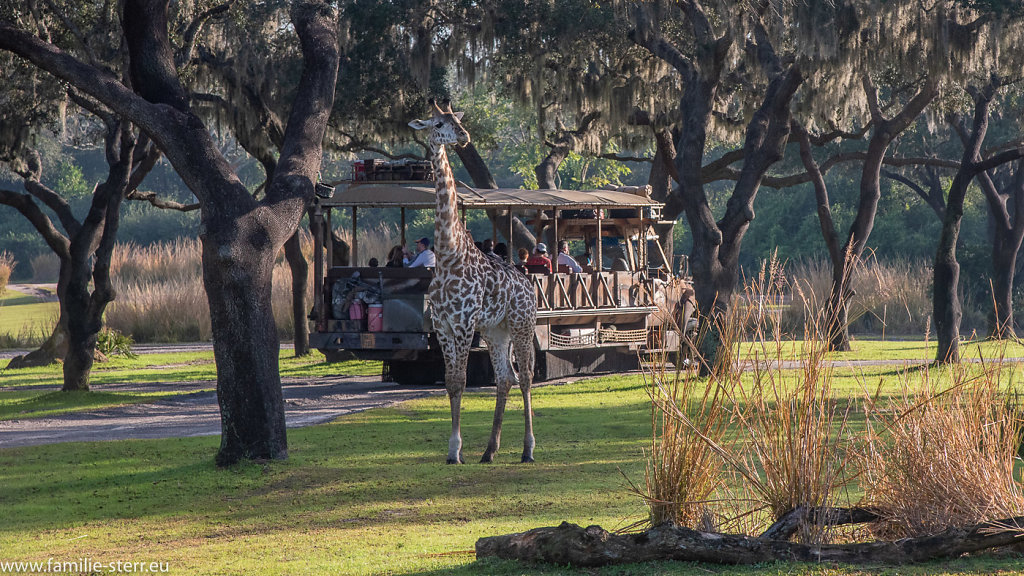 Animal-Kingdom-2018-12-25-14.jpg