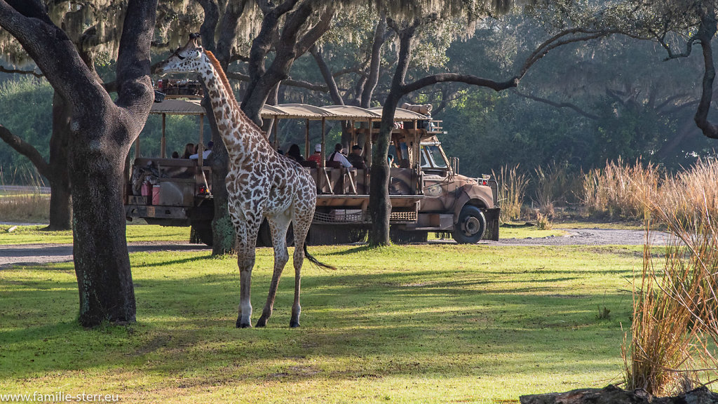 Animal-Kingdom-2018-12-25-15.jpg